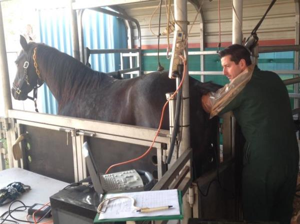 Dr Lloyd Scanning a mare to help time breeding the mare